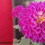 photosamplewaltonprimoz65
